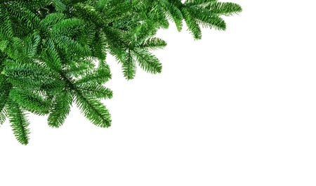 Studio isolated lush fir twigs as a corner ornament or border on pure white background