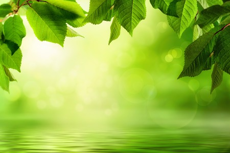 Fresh green leaves frame a beautiful out-of-focus background with sunlight flare and bokeh effects, reflected on a water surface below