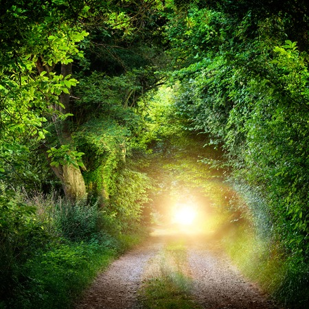 Fantasy landscape with a green tunnel of illuminated trees on a forest path leading to a mysterious light. Brightly lit outdoor night shot. Stockfoto