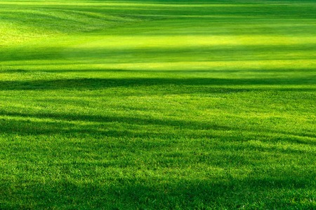 Striped pattern of light and shadows on a beautiful fresh green lawn of a golf course, vibrant color Stockfoto