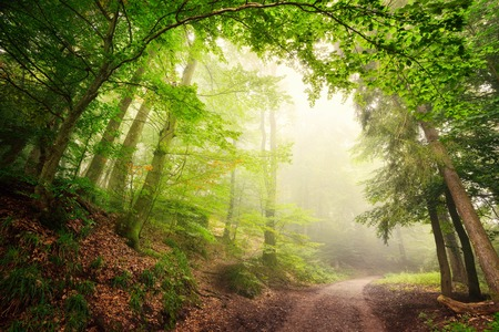 Scenic forest landscape with a large natural archway composed of green trees over a path inviting into the misty light