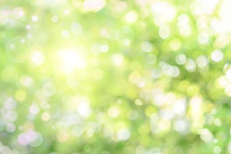 Mooie onscherpe hoogtepunten in gebladerte creëren een heldere bokeh samenstelling, ideaal als natuur achtergrond Stockfoto