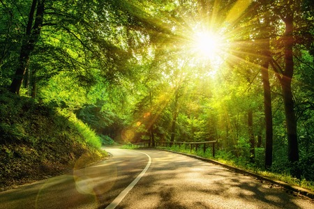 road: Landscape shot with the gold sun rays illumining a scenic road in a beautiful green forest, with light effects and shadows