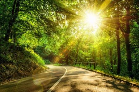 carretera: Paisaje dispar� con los rayos del sol de oro iluminando una carretera esc�nica en un hermoso bosque verde, con efectos de luz y sombras