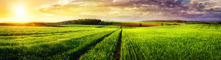 Vast rural landscape sunset panorama, with a field or meadow and tracks leading to the horizon and the colorful clouds