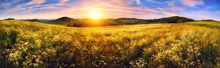 rural landscape: Panorama of a colorful sunset on beautiful meadow, wide format rural landscape with vibrant colors