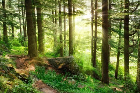 Sun rays illuminating a misty forest scenery with fresh and vibrant green foliage and a footpath