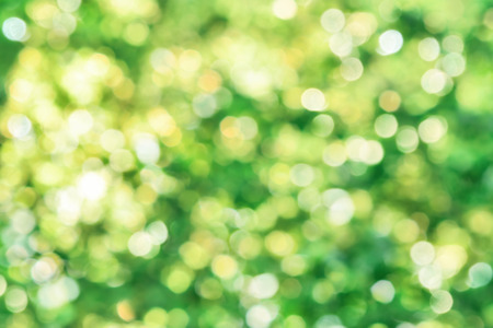highlights: Shining defocused highlights in foliage create a vibrant bokeh composition, ideal as a nature background