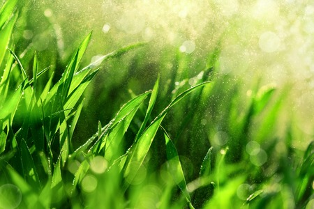 close   up: Grass closeup with fine water drops spraying down and creating a beautiful light effect background, shallow focus Stock Photo