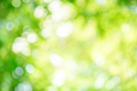 Shining out-of-focus highlights in green leaves create a bright bokeh composition, ideal as a nature background