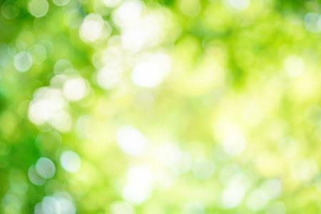 Svítící out-of-focus upozorňuje v zelené listy vytvořit jasný bokeh kompozici, která je ideální jako pozadí přírody