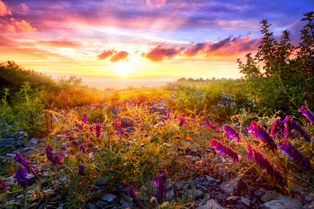暖かい日光の下で混合の植生とバック グラウンドでカラフルな空と風光明媚な日没の風景