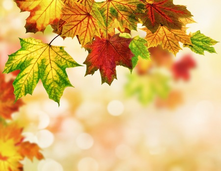 bordered: Colorful autumn bokeh background bordered with maple leaves, shallow focus