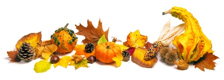corn rows: Natural autumn decoration arranged with dry leaves, ornamental pumpkins, cones and more, studio isolated on white, wide format Stock Photo