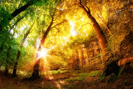 Magical forest scenery with a mix of summer and autumn colors and the sun shining through the leaves Stock Photo