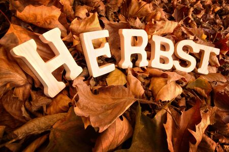 herbst: German word for autumn, Herbst, written on dry leaves with wooden letters