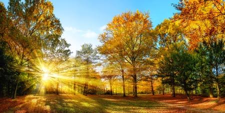 rayos de sol: Panorama escénico del otoño con el sol brillando a través del follaje de oro y iluminando el paisaje forestal Foto de archivo