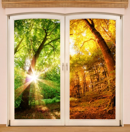 transition: Magic window showing the change of seasons, with a sunny forest half in summer and half in autumn colors