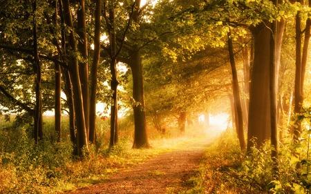 Autumn: Escena hermosa del otoño invita a un paseo por un sendero de niebla en el bosque con los rayos de la luz del sol