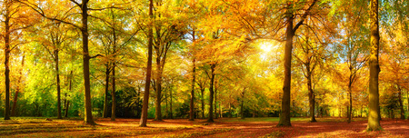 Gorgeous autumn landscape panorama of a scenic forest with lots of warm sunshine