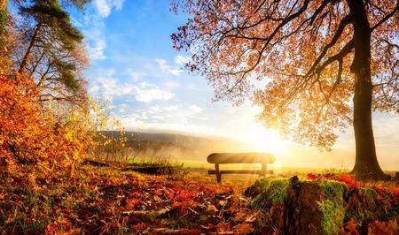 sol radiante: Paisaje de otoño con el sol iluminando con gusto un banco bajo un árbol, un montón de hojas de oro y cielo azul Foto de archivo