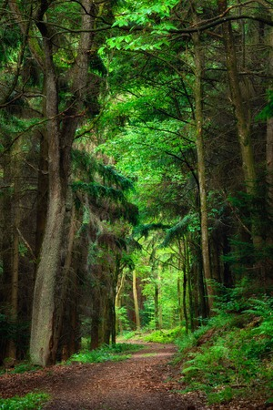 leading: Dreamy scenery in the forest with a path leading into bright greens framed by dark trees Stock Photo