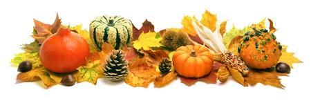 Decoración de otoño natural dispuesta con hojas secas, calabazas ornamentales, conos y más, estudio aislado en blanco, formato ancho Foto de archivo - 44380202
