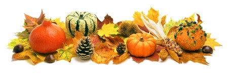 harvest: Natural autumn decoration arranged with dry leaves, ornamental pumpkins, cones and more, studio isolated on white, wide format Stock Photo