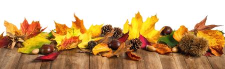castaÑas: Hojas de otoño coloridas, castañas y conos en la mesa de madera natural, estudio aislado en formato panorama en blanco