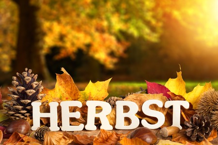 herbst: German word for autumn, Herbst, written on dry leaves with wooden letters, with defocused landscape background Stock Photo