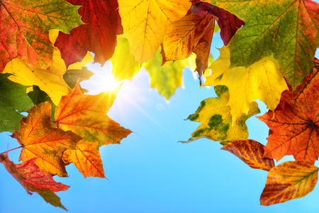 colourful sky: Colourful autumn leaves in the foreground framing the clear blue sky and the sun in the background Stock Photo