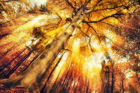 sol radiante: Paisaje precioso bosque en otoño, con una intensa luz cambiante que cae a través del follaje