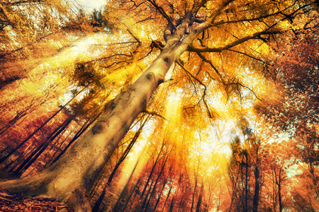 Enchanting forest scenery in autumn, with intense moody light falling through the foliage