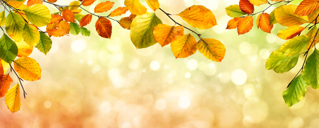 Colorful autumn beech leaves border on a beautiful nature bokeh background, wide panorama format Stockfoto