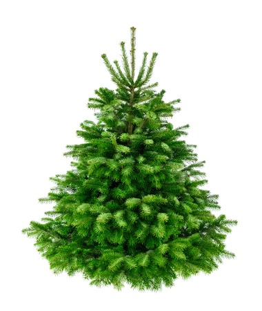 fir tree: Studio shot of a fresh gorgeous fir tree in lush green for Christmas, without ornaments, isolated on pure white