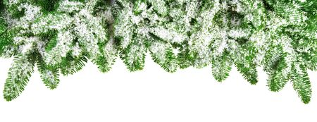 fir twig: Snow covered lush fir branches as a bow-shaped border, studio isolated on pure white background Stock Photo