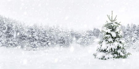 Outdoor panorama shot of a young fir tree in thick snow, for the perfect Christmas mood
