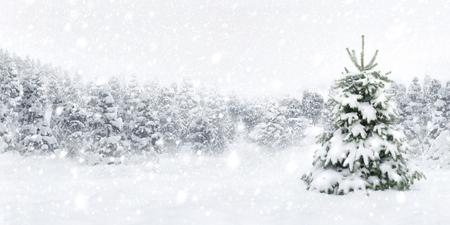 Openlucht panorama shot van een jonge dennenboom in dikke sneeuw, voor de perfecte sfeer van Kerstmis
