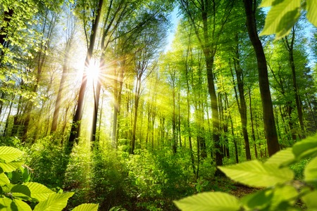 Scenic las świeżych zielonych drzew liściastych otoczone liści, słońce rzucając swe ciepłe promienie przez listowie