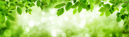 Green leaves and blurred highlights in the background build a natural frame in panorama format Imagens