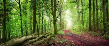 Tranquil spring forest scenery with a path inviting to take a relaxing walk, with beautiful soft light Stock Photo