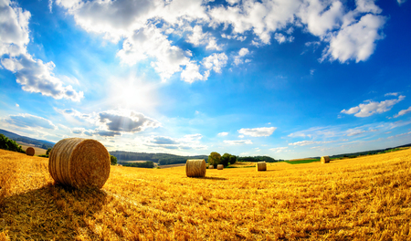 Rural landscape in vivid blue and yellow, a scenery of the sun, blue sky and a harvested gold field Stock Photo