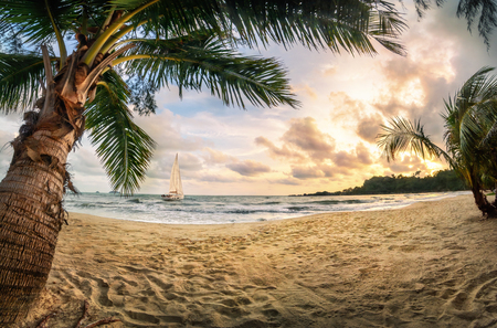 Tropical beach paradise at sunset, with warm-colored sand, palm trees, beautiful clouds and a sailing boat