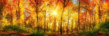 Herfst landschap in panorama formaat: een bos in levendige warme kleuren met de zon die door de bladeren glanst