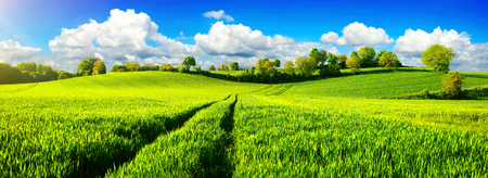 Panoramic landscape with idyllic vast green fields on hills, vibrant blue sky and fluffy white clouds Stock Photo