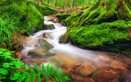Closeup of a small forest brook, the clear water gently flowing through moss covered forest ground Stock Photo