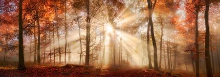 Zonnestralen in een mistig bos in de herfst, een panorama met magische sfeer en warme kleuren