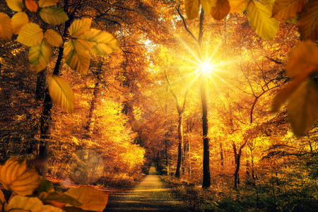 Gold autumn scenery in a forest, with the sun casting beautiful rays of light through the foliage unto a footpath
