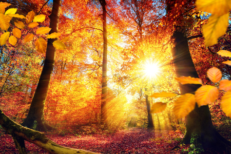 Colorful autumn scenery in a forest, with the sun casting beautiful rays of light through the red and gold foliage
