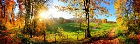 Magnifique panorama paysager montrant une prairie et un chemin menant à une forêt, avec des couleurs d'automne et un ciel bleu